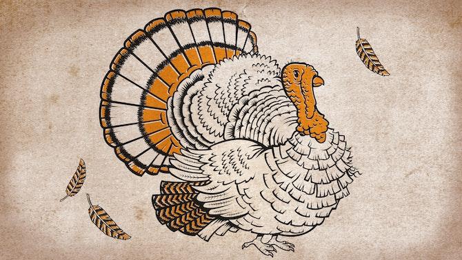 Turkey_feature_PSresized