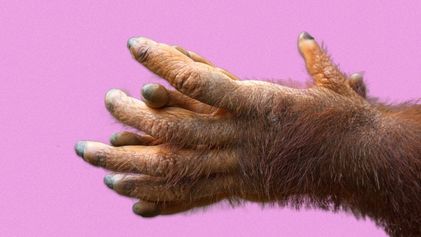 hairy_hands