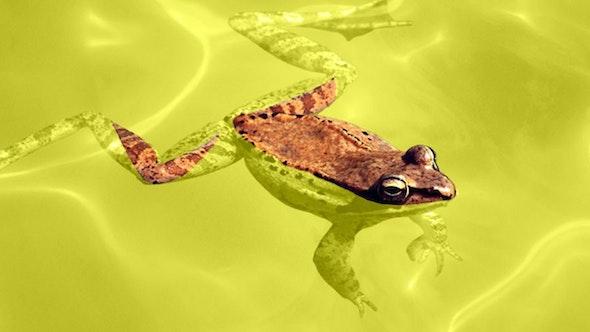 frog_pee