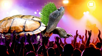 punk_turtle