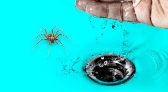 spider_drain
